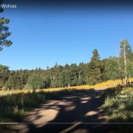 Vallecitos Walking and Coyotes: an Attention Restoration Meditation (7 minutes)