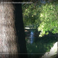Shrewsbury Lake Pines: an Attention Restoration Meditation (3 minutes)