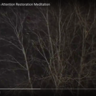 St Louis Night Snow: an Attention Restoration Meditation (2 minutes)