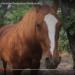Tara Mandala Horse: an Attention Restoration Meditation (1 minute)
